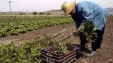 Νέες οδηγίες ΓΓΔΕ για τη φορολόγηση των αγροτών