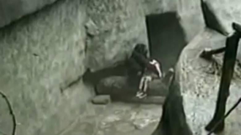 Μπίντι Χούα: Ο θηλυκός γορίλας που έσωσε τρίχρονο παιδί και έγινε ήρωας (vid)