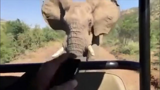 Όταν ένας ελέφαντας πήρε στο κατόπι τον «Eξολοθρευτή»