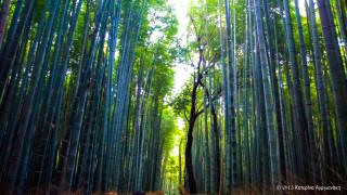 Ιαπωνία: Στη χώρα του Χινομάρου θα θέλεις πάντα να επιστρέφεις…