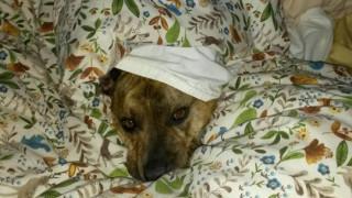 Το σκυλί που αγνοήθηκε από 18.720 άτομα θα γίνει αστέρας του Χόλιγουντ