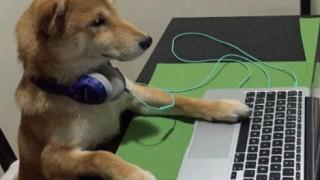 Αυτός είναι ο σκύλος που παρακολουθεί Netflix με τις ώρες... (pics)
