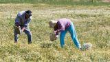 Αυξήσεις εισφορών για 667.229 αγρότες