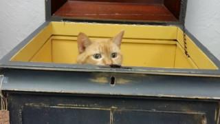 Γάτος ηλικίας... 117 ετών βρίσκει νέο σπίτι σε κατάστημα με αντίκες