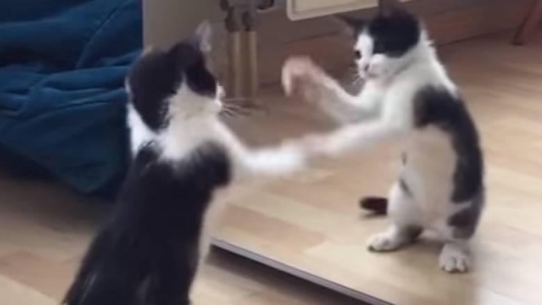 Γατάκι βλέπει τον εαυτό του για πρώτη φορά στον καθρέφτη και παθαίνει... αμόκ (vid)