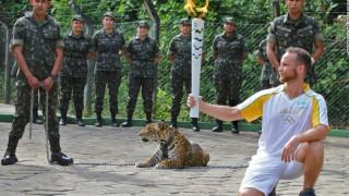Ολυμπιακοί Αγώνες: Θανατώθηκε τζάγκουαρ κατά τη διάρκεια της λαμπαδηδρομίας