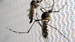 Βρέθηκαν αντισώματα για τον ιό Ζίκα