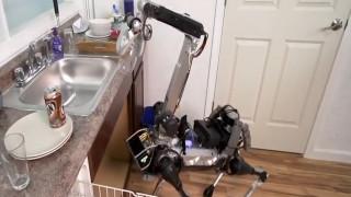 Ο σκύλος ρομπότ που πλένει τα πιάτα