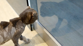 Η γάτα που κρατούσε ομήρους τους ιδιοκτήτες της
