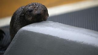 ΗΠΑ: Η άγνοια σκότωσε φώκια