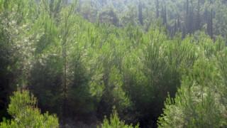 Εθελοντές περιπολούν με drones το δάσος του Σέιχ Σου
