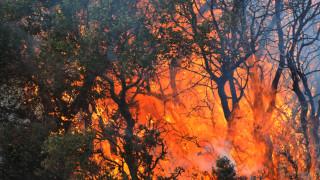 Σε εξέλιξη πυρκαγιά στην περιοχή της Ναυπακτίας