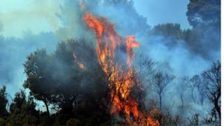 Υπό μερικό έλεγχο η φωτιά στη Ναυπακτία