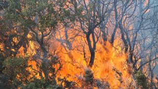Μάχη με τις φλόγες στη Σάμο-Υψηλός κίνδυνος πυρκαγιάς στα νησιά Β. Αιγαίου