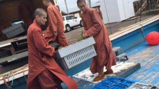 Βουδιστές μοναχοί αγόρασαν εκατοντάδες αστακούς και τους απελευθέρωσαν στον ωκεανό