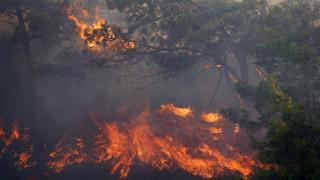 Πυρκαγιά στην Ιεράπετρα-Στις φλόγες το δάσος του Σελάκανου