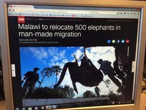 Πάνω από 500 ελέφαντες μεταφέρθηκαν σε νέο σπίτι στο Μαλάουι