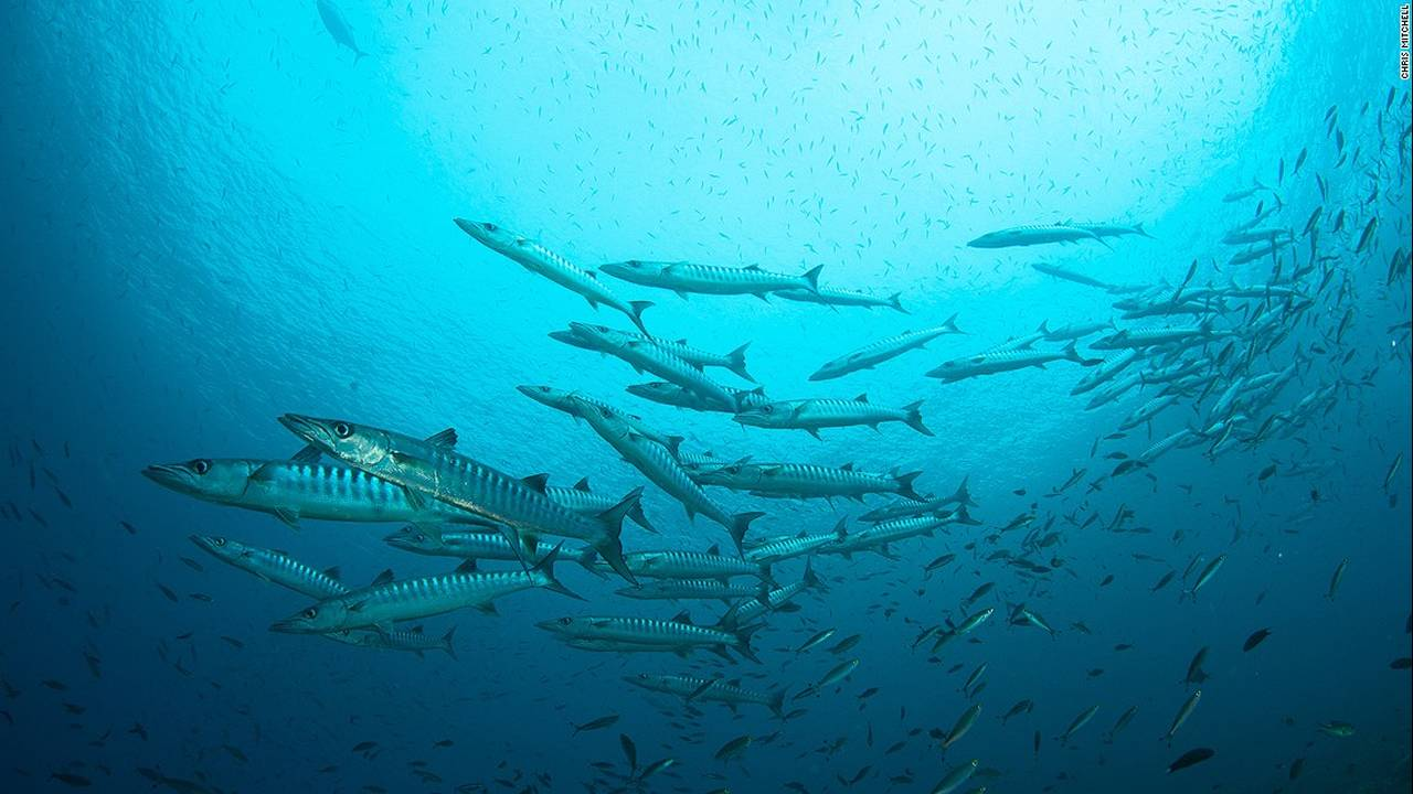 https://cdn.cnngreece.gr/media/news/2016/07/20/40051/photos/snapshot/160623082246-chris-mitchell-raja-ampat-coral-reefs-cnn-1-super-169.jpg