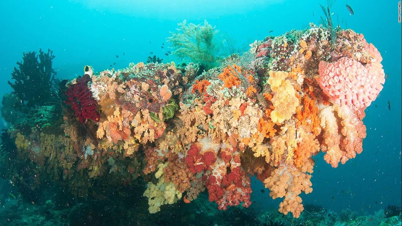 https://cdn.cnngreece.gr/media/news/2016/07/20/40051/photos/snapshot/160623082455-chris-mitchell-raja-ampat-coral-reefs-cnn-2-super-169.jpg