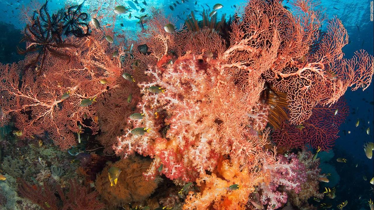 https://cdn.cnngreece.gr/media/news/2016/07/20/40051/photos/snapshot/160623082656-chris-mitchell-raja-ampat-coral-reefs-cnn-3-super-169.jpg
