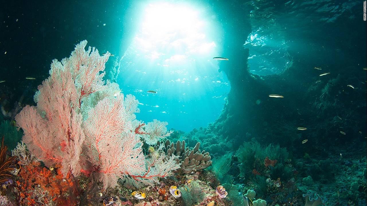 https://cdn.cnngreece.gr/media/news/2016/07/20/40051/photos/snapshot/160623082906-chris-mitchell-raja-ampat-coral-reefs-cnn-4-super-169.jpg