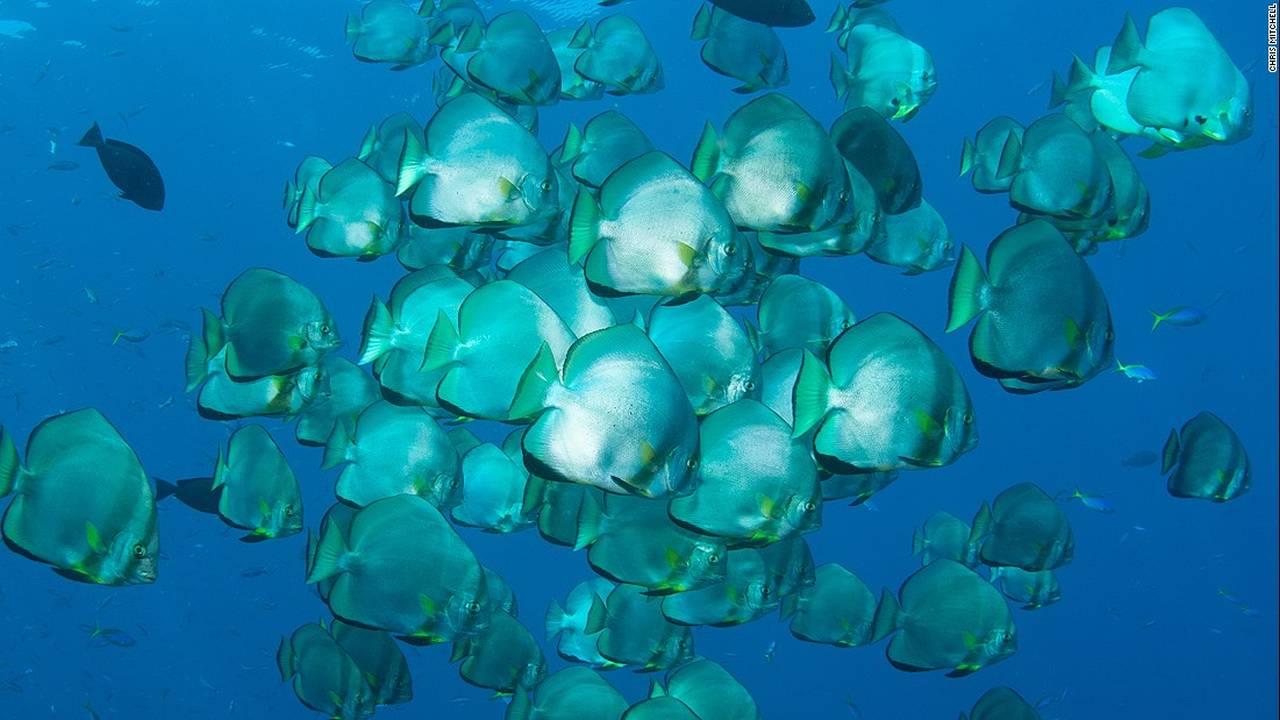 https://cdn.cnngreece.gr/media/news/2016/07/20/40051/photos/snapshot/160623083043-chris-mitchell-raja-ampat-coral-reefs-cnn-5-super-169.jpg