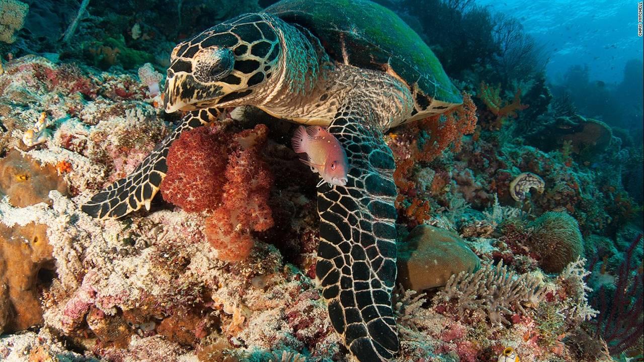 https://cdn.cnngreece.gr/media/news/2016/07/20/40051/photos/snapshot/160623083304-chris-mitchell-raja-ampat-coral-reefs-cnn-6-super-169.jpg