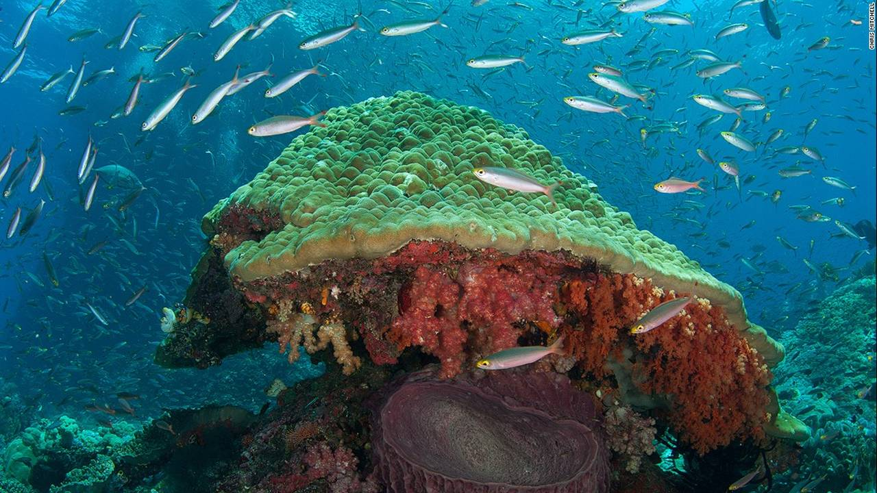 https://cdn.cnngreece.gr/media/news/2016/07/20/40051/photos/snapshot/160623083500-chris-mitchell-raja-ampat-coral-reefs-cnn-7-super-169.jpg