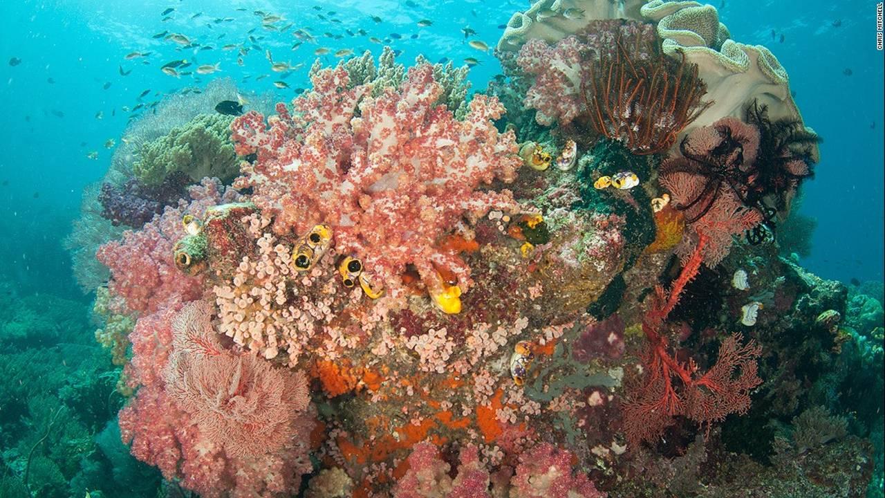 https://cdn.cnngreece.gr/media/news/2016/07/20/40051/photos/snapshot/160623083729-chris-mitchell-raja-ampat-coral-reefs-cnn-8-super-169.jpg