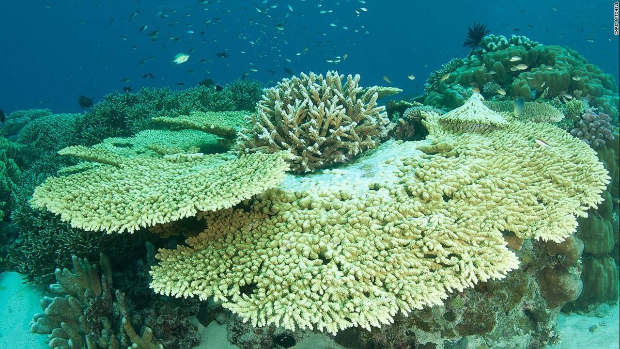 https://cdn.cnngreece.gr/media/news/2016/07/20/40051/photos/snapshot/160623083839-chris-mitchell-raja-ampat-coral-reefs-cnn-9-super-169.jpg