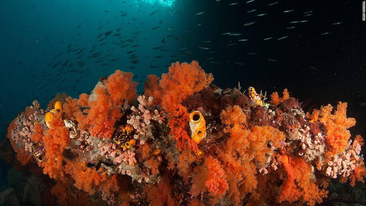https://cdn.cnngreece.gr/media/news/2016/07/20/40051/photos/snapshot/chris-mitchell-raja-ampat-coral-reefs-cnn-10-super-169.jpg