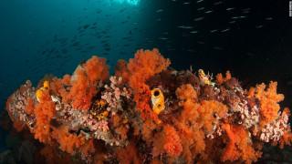 Raja Ampat: Οι εκπληκτικοί κοραλλιογενείς ύφαλοι της Ινδονησίας (pics)