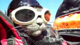 Δικάβαλο σε μηχανή με γάτο easy rider (vid)