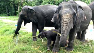 Μεγάλη επιχείρηση μεταφοράς 500 ελεφάντων σε πάρκο του Μαλάουι