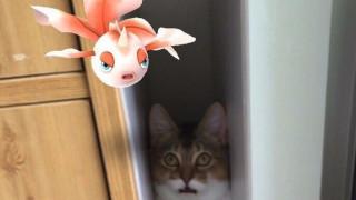 Μπορούν τα κατοικίδια να δουν τα Pokemon; Οι Ιάπωνες λένε ναι