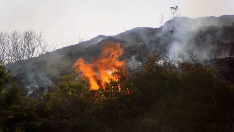 Ξέσπασε φωτιά στο Μαραθώνα