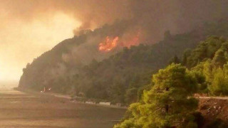 Εύβοια: Τεράστια οικολογική καταστροφή άφησε πίσω της η φωτιά