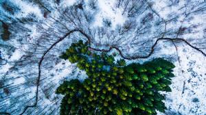 Δάσος Kalbyris, Δανία