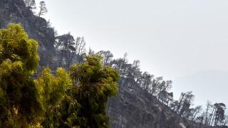 Γ. Κωστόπουλος: Τεράστια η οικολογική καταστροφή στην Εύβοια (aud)