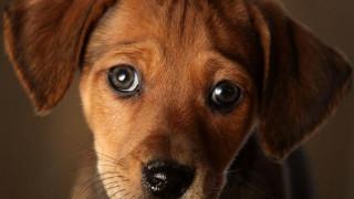 Στο Πακιστάν «τίμησαν» τα αδέσποτα θανατώνοντας με φόλες περισσότερα από 700 σκυλιά...