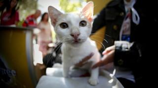 Με ανάνηψη και μαλάξεις έσωσε η ιταλική ακτοφυλακή γατάκι που πνιγόταν