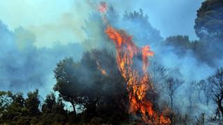 Φωτιά στο Πόρτο Λάφια Καρύστου