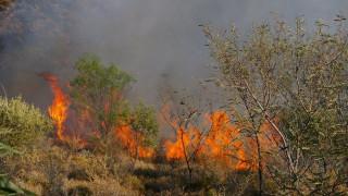 Γ.Γ. Πολιτικής Προστασίας: Πολύ υψηλός ο κίνδυνος πυρκαγιάς την Κυριακή