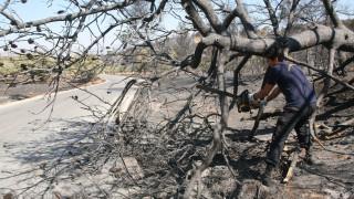 Δύο χρόνια φυλάκιση σε μελισσοκόμο για την φωτιά στα Καλύβια Αττικής