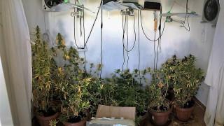 Κέρκυρα: Βρέθηκε εργαστήριο καλλιέργειας κάνναβης