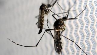 Εντοπίστηκαν κρούσματα ελονοσίας- Καθησυχαστικό το ΚΕΕΛΠΝΟ
