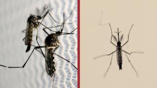 Ελονοσία: Και ο πανικός ...τσιμπάει