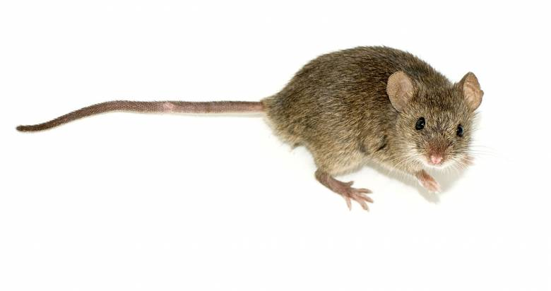 Ο ποντικός που ανέβαλε μια ολόκληρη πτήση