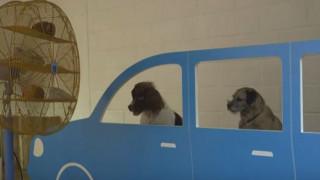 Έκθεση σύγχρονης τέχνης για σκύλους στο Λονδίνο (vid)