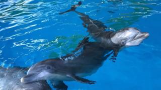 Τέσσερα δελφίνια από την Φινλανδία στο Αττικό Ζωολογικό Πάρκο